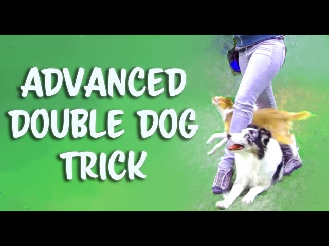 How to Train Kikopup's 'Double Dog Crawl Weave' - ADVANCED LEVEL - Dog training tricks