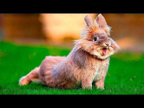 Смешные кролики. Подборка Топ 7 - -Видео сёрфинг