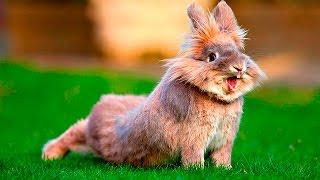 Смешные кролики 2 - Funny rabbits - Подборка приколов(Смешные кролики 2 - Funny rabbits - Подборка приколов. ====== Ссылка на видео: https://youtu.be/lI25sbvgfJ8 ======= ПОДПИШИСЬ И БУДЬ..., 2016-03-19T09:11:04.000Z)