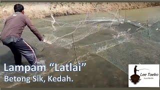Cara tankap ikan lampan guna kaedah latlai di kg betong sik