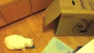 кот поводырь коробок Юмор! Прикол! Смех