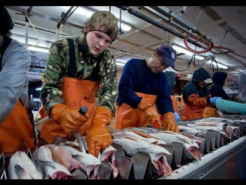 How To Find REAL Alaska Seafood Processing Jobs 2018