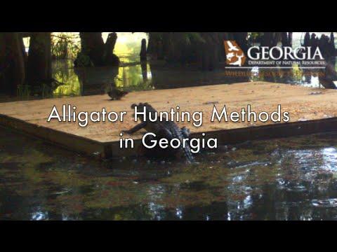 Alligator Hunting Methods In Georgia