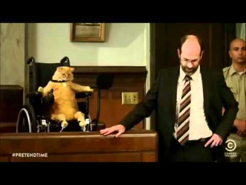 Download Wheelchair Cat- courtroom