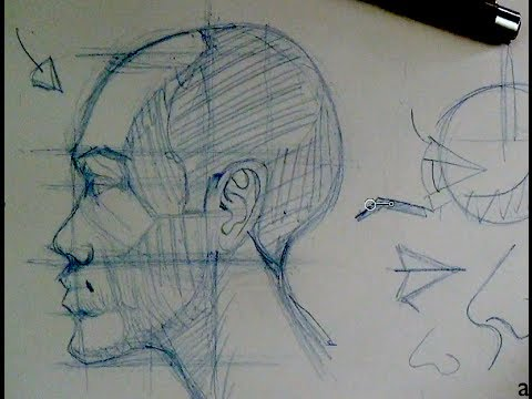 drawing head face proportions how to draw the head in profile