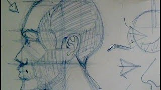 drawing head face proportions   how to draw the head in profile view