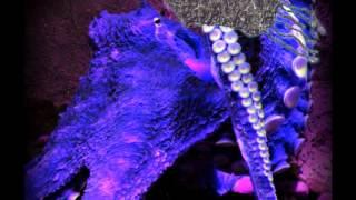 Cephalopod-Tentacle Erotica