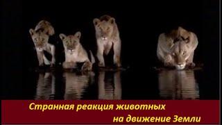 Cтранная реакция животных  № 2179
