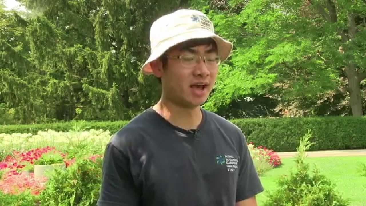 Jin Jin Zhang - Student Landscape Technician (RBG) - YouTube