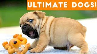 Ultimate FUNNY DOGS amp CUTE PUPPIES of 2018  Try Not to Laugh Animals amp Pets Compilation April