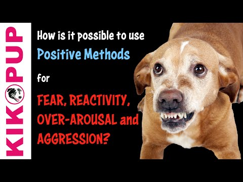 How is it possible to use POSITIVE METHODS for FEAR, REACTIVITY and AGGRESSION in Dog Training?