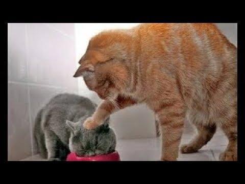 10 Menit Video Tingkah Lucu Kucing Bikin Ketawa Ngakak