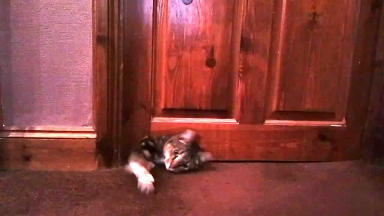 Cat Crawls Under Door. funny cat animals gif on gifer by ...