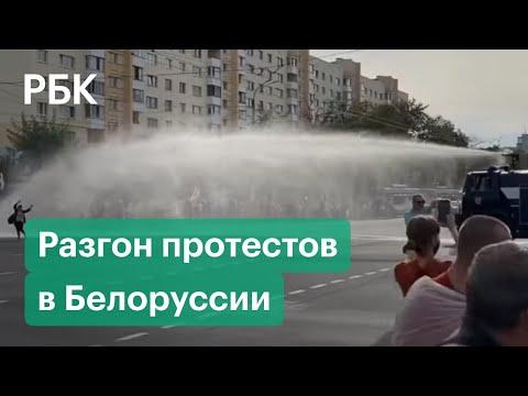Вопрос: Как в Белоруссии относятся к животным?