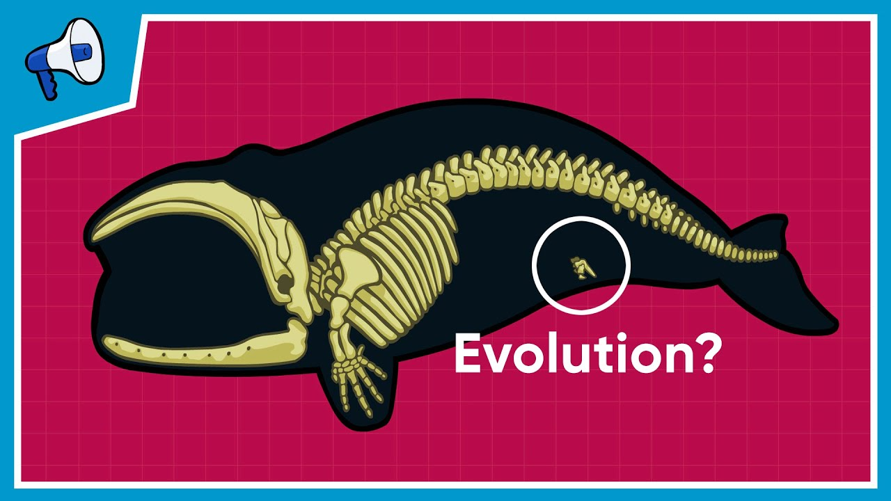 What is the Evidence for Evolution? - YouTube