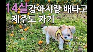 배타고 강아지랑 제주도 가기(퀸제누비아호 리뷰!)