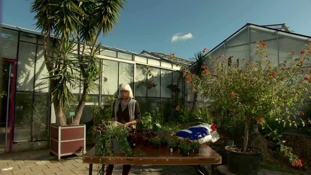 Boom In Pot Buiten Winterhard.Wintergroene Planten In Een Pot Youtube