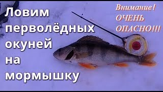Ловим перволёдных окуней на мормышку - Болен Рыбалкой №387