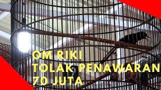 Video Aksi Luar Biasa Murai Batu Wiro Sableng download MP3, 3GP, MP4, WEBM, AVI, FLV April 2018