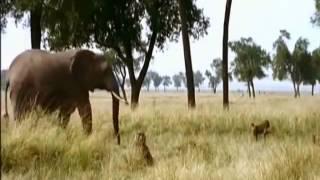 Самые смешные животные  Приколы с животными лето 2013