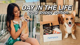 DAY IN MY LIFE WITH A PUPPY Corgi Edition PuppyPack Unboxing, Puppy Playtime, Tips for Puppy Owners