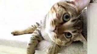 Mean Kitty - Identity Crisis