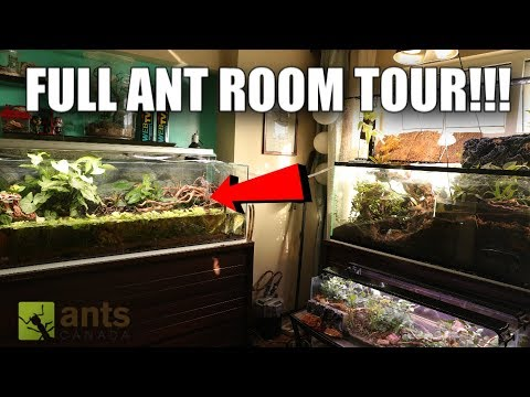 A Room Full of Ant Farms -- 2 Million Subs Special