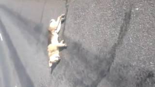 Сбил собаку на мотоцикле