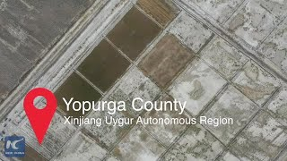 Saline soil rice achieved high yield in Xinjiang