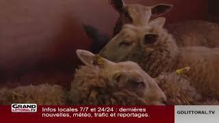 Mêler moutons et bière