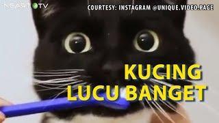 Kucing Lucu Banget Ngakak Buka Gembok Pijat-memijat