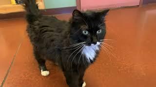 Cat Tip Tuesday: How Do You Socialize a Shy Cat?