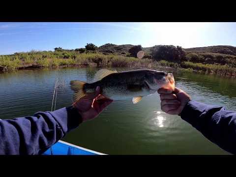 Cachuma Lake Mid May Bass Fishing
