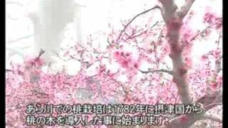 Repeat youtube video 桃源郷