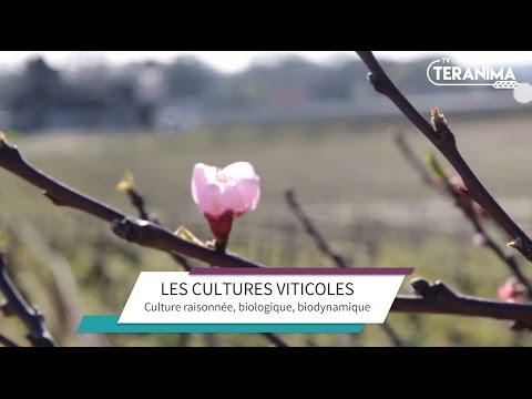 Entre culture raisonnée, biologique et biodynamique - Teranima TV