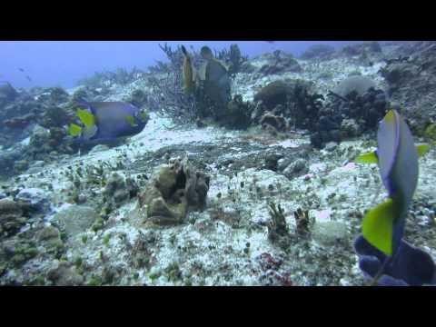 Beautiful natural aquarium in Santa Rosa(nice fishes)