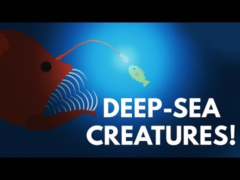 How Did Deep-Sea Creatures Evolve To Look So Scary?