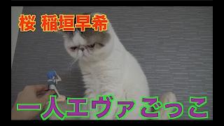 飼い主の一人エヴァごっこにどんな顔していいかわからない猫