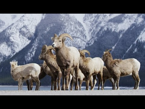 Alberta Canada - Banff Frozen in Time in 4K! | DEVINSUPERTRAMP