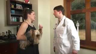 General Veterinary Hospital: The Doctor Diagnoses Reverse Sneezing