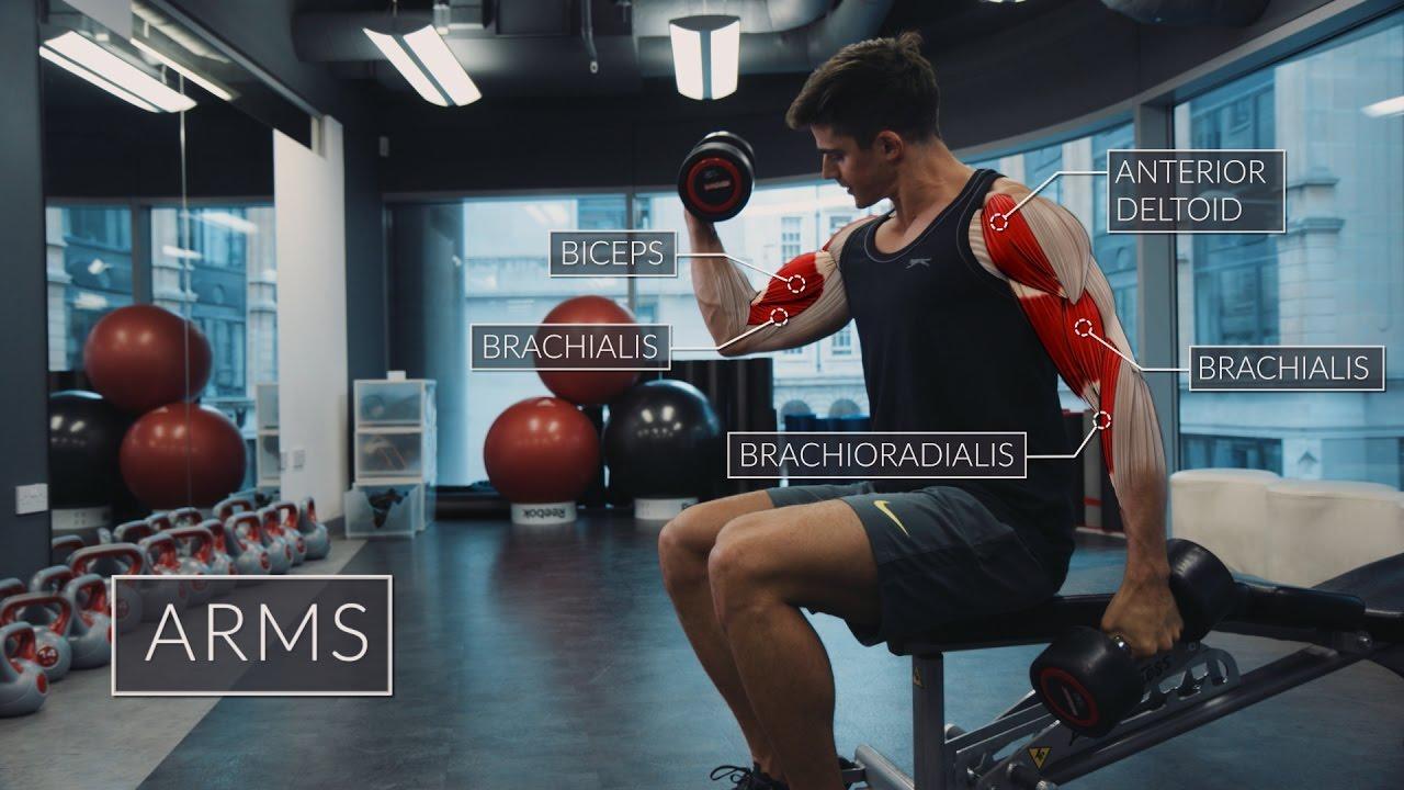 Exercise Anatomy: Arms Workout | Pietro Boselli - YouTube