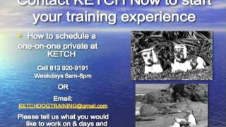 Private Dog Training Lessons At Ketch In Tampa, Fl