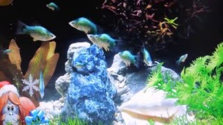 Аквантика настоящий аквариум 14 02 2016 года