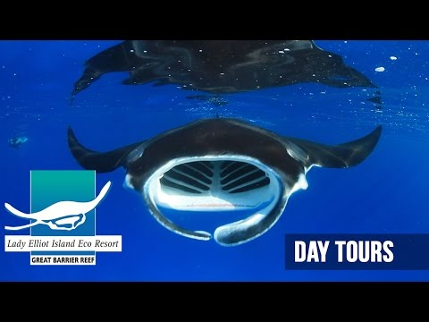 Day Tour to Lady Elliot Island, Southern Great Barrier Reef, Queensland, Australia
