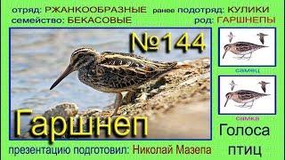 Гаршнеп. Голоса птиц