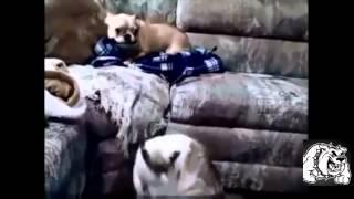кошки и собаки приколы , смешное видео 2015, приколы кошки, приколы с собаками
