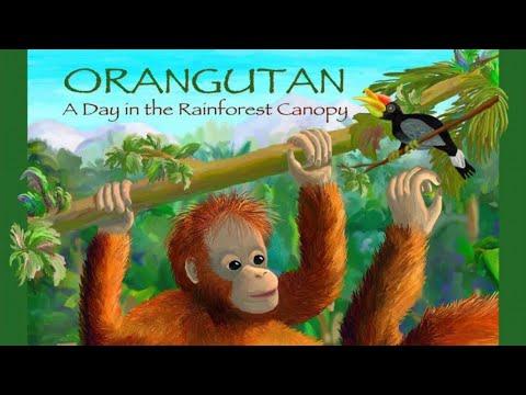 "Children's Read Along Books: ""Orangutan A Day In The Rainforest Canopy"" by Rita Goldner"