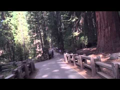 Walking to the General Sherman tree
