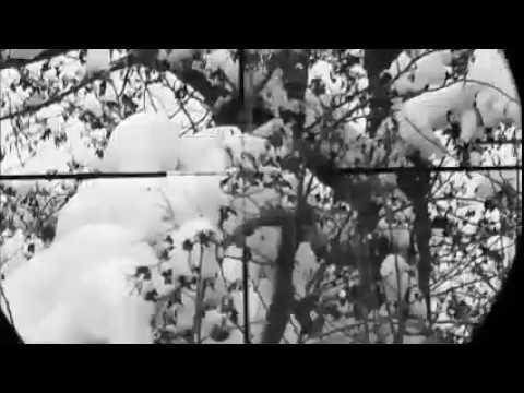 blackbird hunt --KARA TAVUK AVI