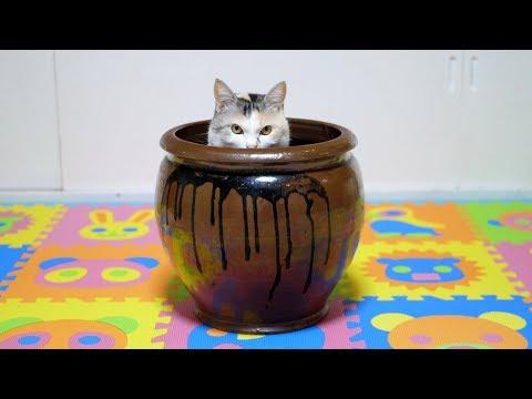 猫部屋に大きな壺を置いてみると‥
